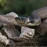 Snakeskin Slough