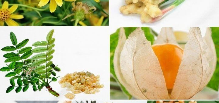 herbs to treat joint pain