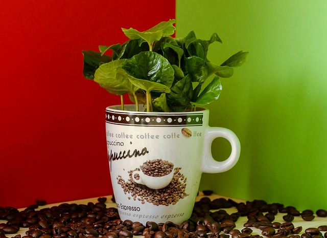 Green coffee bean anorexia